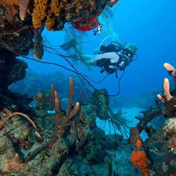Cane Bay DIving St Croix